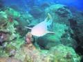 В Океан Плаза привезли новую агрессивную акулу (ФОТО)
