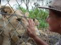 Львы в зоопарке изувечили смотрительницу