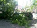 В Одессе дерево упало на три машины