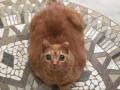 Кошка с огромными глазами стала звездой сети