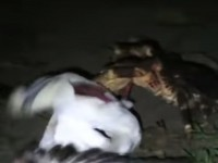Нападение рака на птицу удалось снять на видео