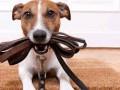 Сколько можно заработать на аренде собак в Украине во время карантина