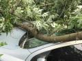 На Оболони упавшая ветка разбила два авто