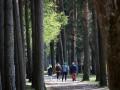 В лесном хозяйстве Украины планируют трудоустроить несколько тысяч человек