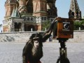 Фотографии, сделанные шимпанзе на Красной площади, продали за 50 тысяч фунтов