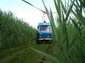 В Одессе приостановил движение популярный камышовый трамвай из-за кражи проводов