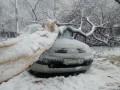 В Харьковской области из-за падения дерева погибла женщина