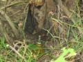 Под Волновахой местный житель подорвался на растяжке