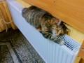 Сколько платят за отопление