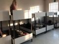 Власти Греции пропустили в страну трех задержанных украинцев