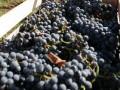 После российского эмбарго ЕС открывает свой рынок для молдавского вина, не дожидаясь сделки по ЗСТ