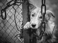 На Волыни мужчина пытался убить пса шилом: Делом занялась полиция