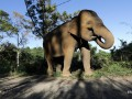 Таиланд отменил запрет на экспорт слонов