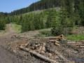 На Прикарпатье лесники избили сотрудников природного парка
