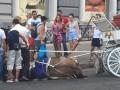 В Одессе лошадь упала в обморок от жары