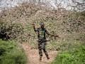 В Африке происходит крупнейшее нашествие саранчи за 25 лет