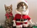Новогодние котики стали звездами Сети