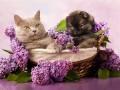 2 мая: какой сегодня праздник