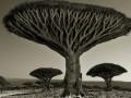 Самые старые деревья на планете
