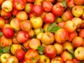 В Украине подешевели яблоки