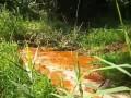В Харькове река окрасилась в оранжевый цвет