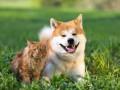 В Украине хотят ввести обязательную регистрацию животных
