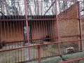 В частном зверинце под Харьковом обнаружили голодающих животных