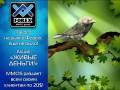 В течение месяца FOREX MMCIS group будет раздавать «живые» деньги