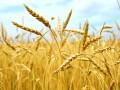 Украина продаст две трети рекордного урожая зерна