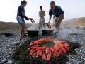 В США посетителям ресторана запретили играть с омарами