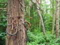Война природы и цивилизации: листья против железа (фото)
