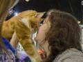 Битва гигантов: в Киеве выбирали крупнейшего кота