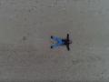 Что-то с чем-то: в Сети высмеяли видео Саакашвили на пляже