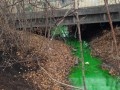 В Киеве позеленела река Дарница