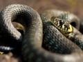 В Одессе змея пробралась в авто и напугала водителя во время движения