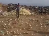 На свалке в Грузии вылупились сотни цыплят