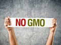 В Украине хотят ввести рекордные штрафы за продукты с ГМО