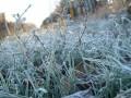 Спасатели предупредили о заморозках в Украине