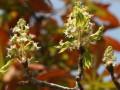 Итальянские поставщики каштанов пообещали заменить деревья на Крещатике