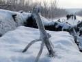 С начала года на Донбассе не стреляли
