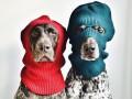 Пойнтер бро: собаки стали новыми звездами Instagram