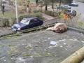 В Луцке мужчина выбросил собаку из окна