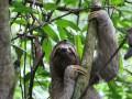 Туристам в Коста-Рике запретят делать селфи с животными