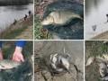 ОБСЕ беспокоят объемы рыбной ловли на Днестре