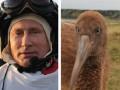 Стерхи Путина не смогли вернуться в дикую природу из-за узбекских пограничников - СМИ