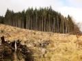 В Раде пошли на уступки Порошенко по экспорту леса