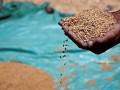 Экспорт сельхозпродукции из Украины в Россию снизился почти на треть