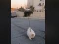 На Кипре из-за карантина мужчина отправил собаку гулять с дроном