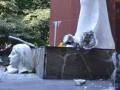 Во Львовской области вандалы повредили памятник воинам УПА