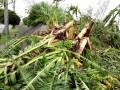 В Японии более 110 тысяч домов без электроэнергии из-за тайфуна